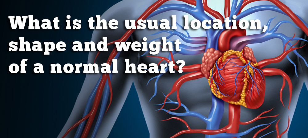 What is the usual location shape and weight of a normal heart