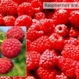 Raspberries-are-good-sources-of-fiber-featured